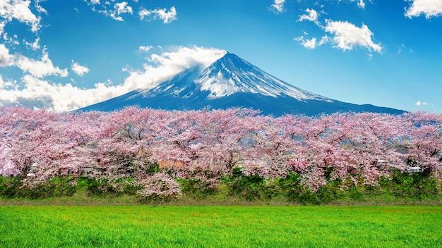 Montagna fuji e fiori di ciliegio in primavera, giappone. Foto Gratuite