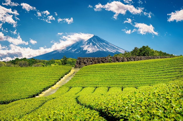 静岡県の富士山と緑茶農園。 無料写真
