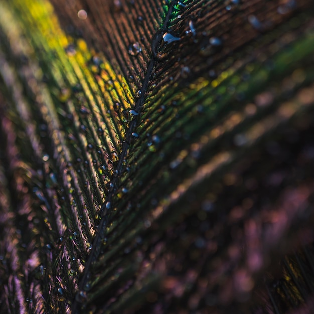Full frame of colorful shiny peacock feather with water drops Free Photo