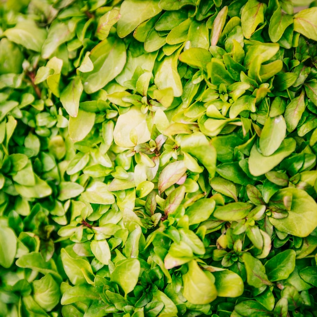 Full frame of fresh green leaves background Free Photo