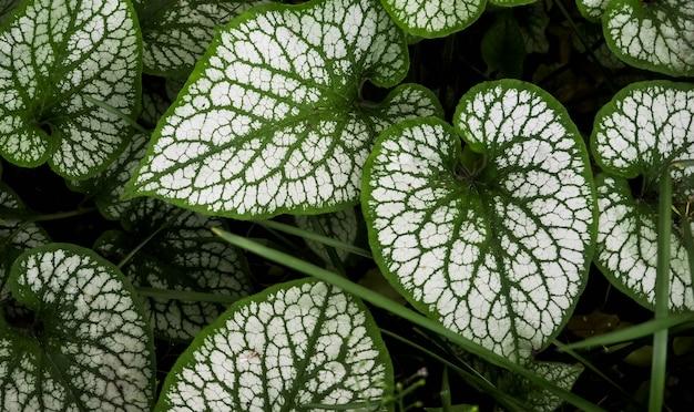 Full frame many the green leaf Premium Photo