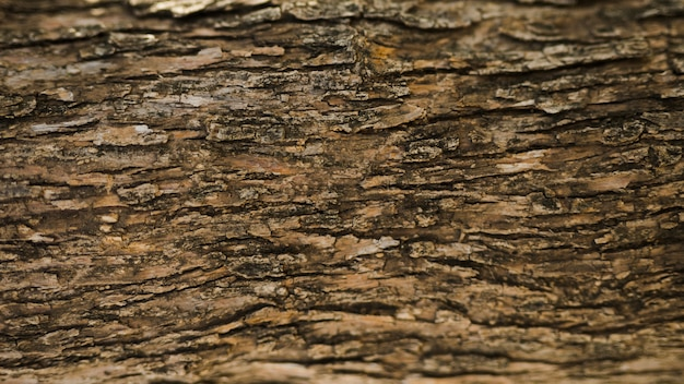 Full frame shot of an old tree trunk Free Photo