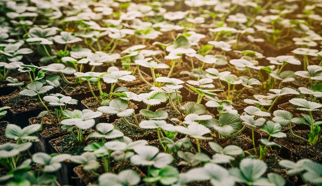 Full frame of small green seedling plants Free Photo