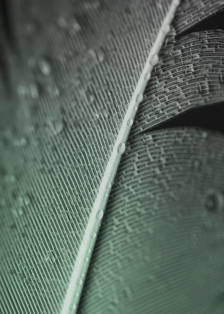 Full frame of water droplets on grey feather surface Free Photo