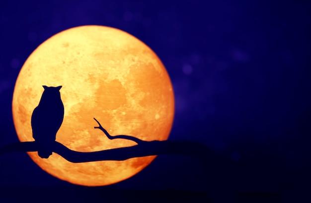 Full moon in the night sky Free Photo