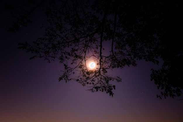 full moon shine bright through frame of tree in the night photo