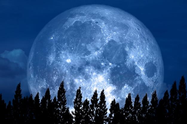 Full rose moon back on silhouette pine on night sky Premium Photo