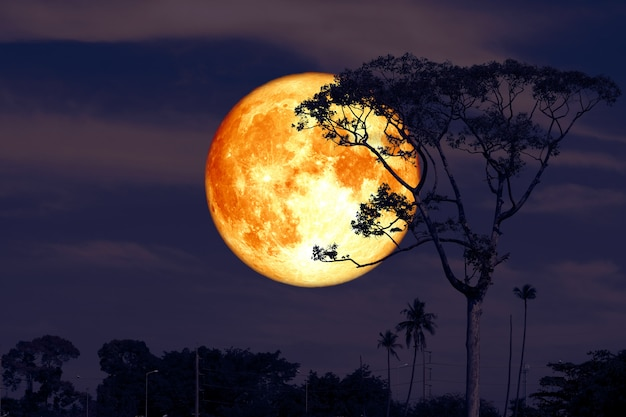Full super buck moon on night red sky back silhouette tree Premium Photo