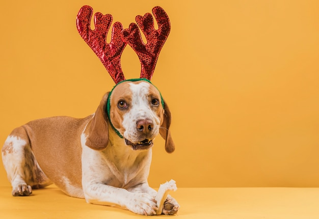 Funny beautiful dog wearing reindeer horns Free Photo