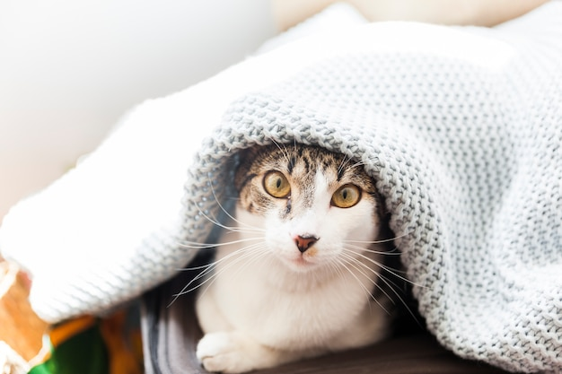 Funny cat under blanket Free Photo