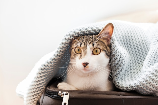 Funny cat under blanket on suitcase Free Photo
