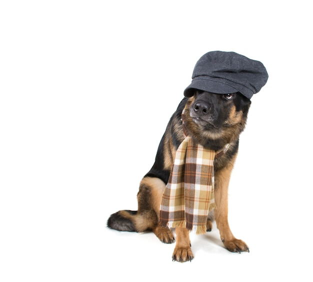 Funny cute dog wearing a flat cap and a scarf Premium Photo