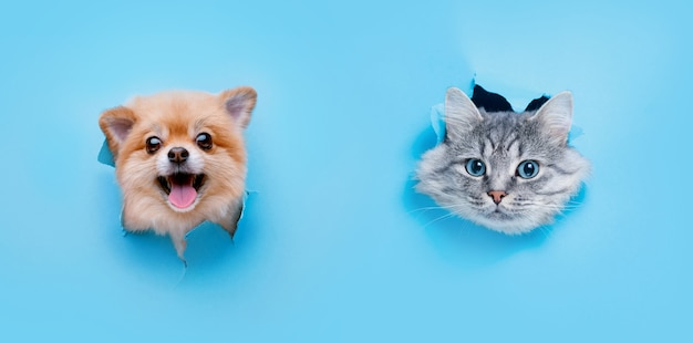 Funny gray kitten and smiling dog with beautiful big eyes on trendy blue paper