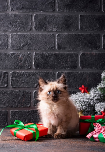 Funny kitten near and gift boxes Premium Photo