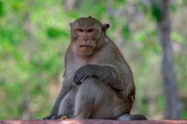 Capo scimmia divertente in una foresta Foto Gratuite