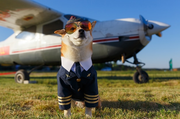 Funny photo of the shiba inu dog in a pilot suit at the airport Premium Photo