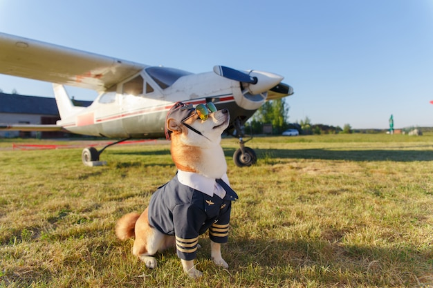 Funny photo of the shiba inu dog Premium Photo