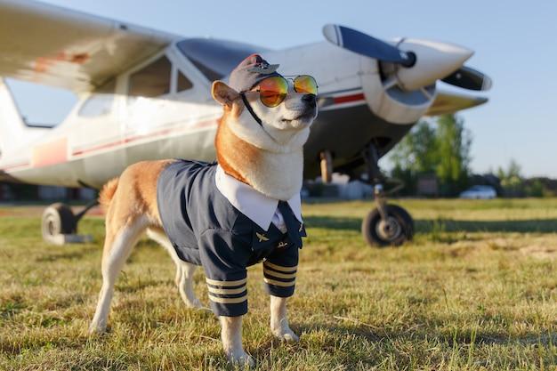 Funny photo of the shiba inu dog Premium Photo