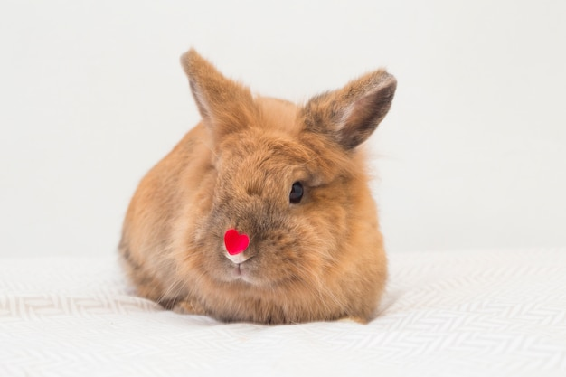 Funny rabbit with little decorative red heart on nose Free Photo