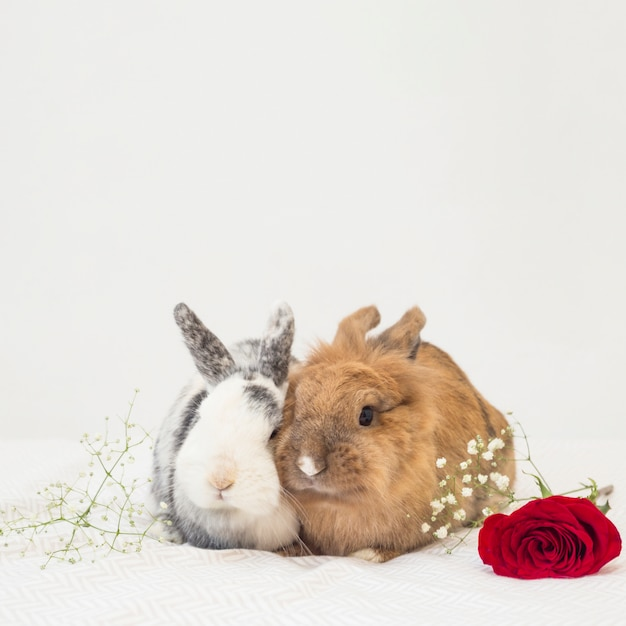 Funny rabbits near flowers on bed sheet Free Photo