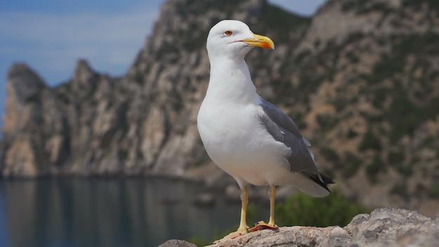 Забавная птица чайка стоя на берегу моря заделывают. Premium Фотографии