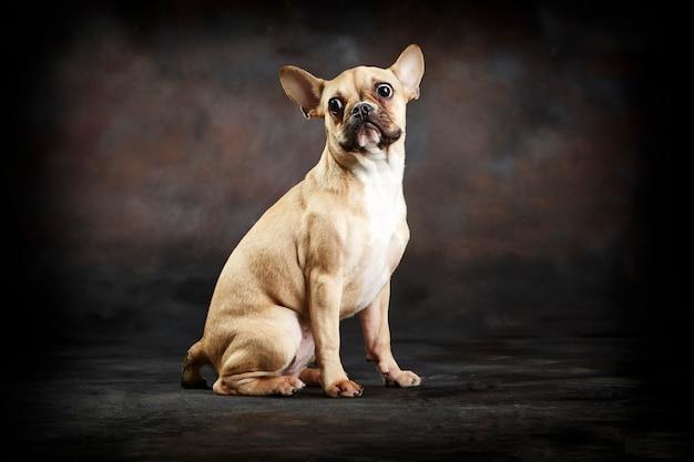 Смешная супер напуганная собака Premium Фотографии