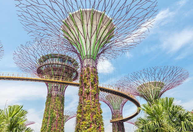 Futuristic super trees in the center of singapore in gardens by the bay. Premium Photo