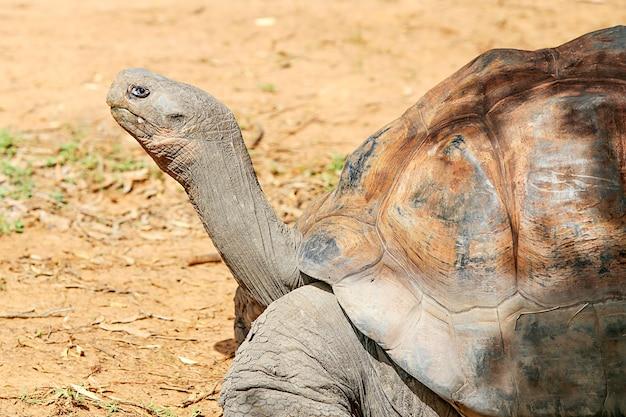 Galapagos tortoise Premium Photo