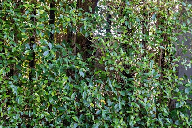 녹색 나뭇잎과 강철 레일 단풍 자연 녹색 배경으로 정원 장식 프리미엄 사진