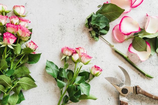 コンクリートの背景にバラと庭の植木屋 無料写真