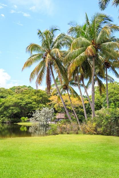 Garden with palm trees Premium Photo
