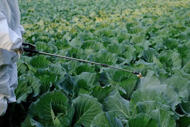 キャベツ野菜植物に殺虫剤と化学をスプレーする防護服の庭師 Premium写真