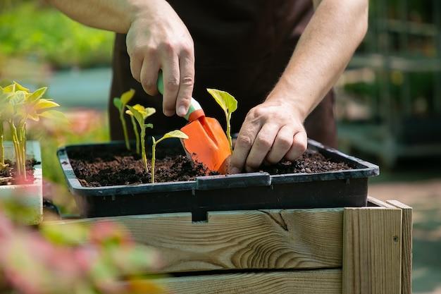 Giardiniere che pianta germogli, usando la pala e scavando il terreno. primo piano, colpo ritagliato. lavoro di giardinaggio, botanica, concetto di coltivazione Foto Gratuite