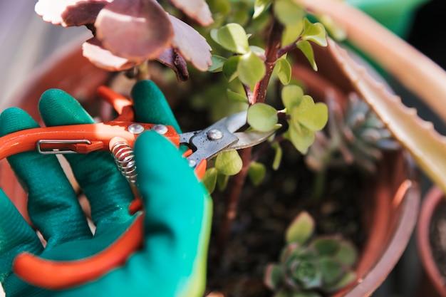 庭師が担任で植物の小枝を切る 無料写真