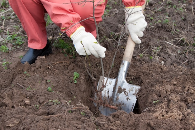 Садовник устанавливает ростки в саду Бесплатные Фотографии