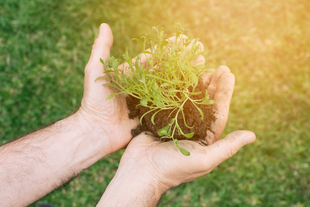Gardener withsmall sapling in hands Free Photo