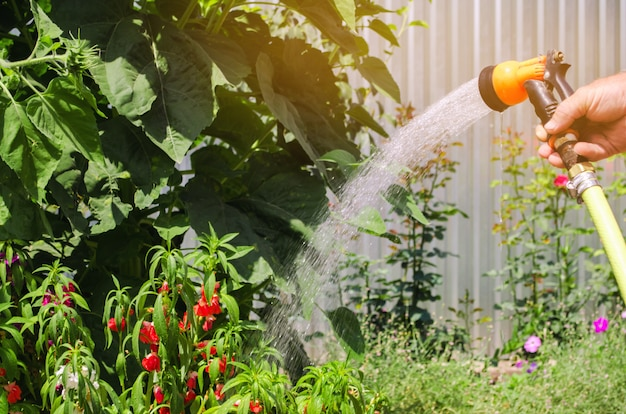 A gardener with a watering hose Premium Photo