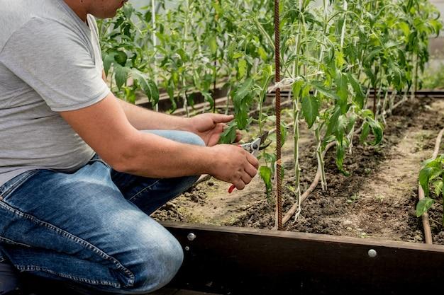 温室で働く庭師 Premium写真