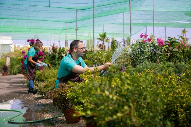 물을주기 위해 호스를 사용하여 온실에서 식물을 재배하는 앞치마의 정원사. 물 밝아진 앞치마에 남자입니다. 원예 작업 개념 무료 사진