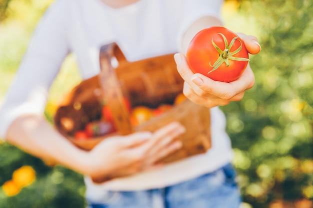 ガーデニングと農業のコンセプトです。若い女性の農場労働者の手が庭で新鮮な完熟有機トマトを選ぶバスケットを保持しています。温室の生産物。野菜の食糧生産。 Premium写真