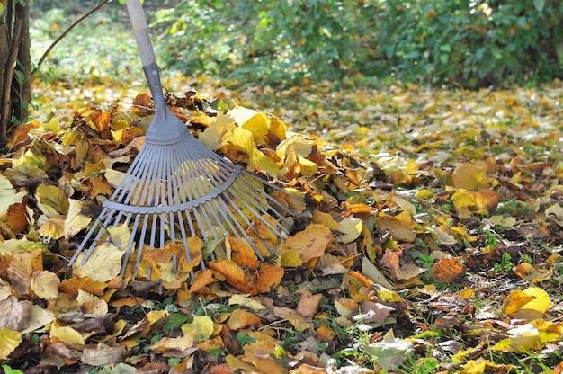 Gardening in autumn Premium Photo