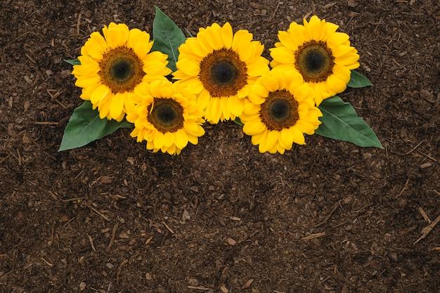 Садовая композиция с пятью подсолнухами Premium Фотографии