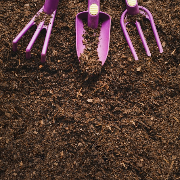 Gardening concept with space on bottom Free Photo