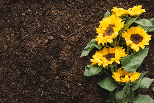 Gardening concept with sunflower and space on left Free Photo