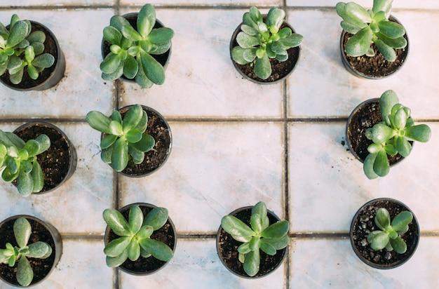 ガーデニング、植栽、植物のコンセプト-温室で鉢植えの植物のクローズアップ。コピースペース付きのトップビュー Premium写真