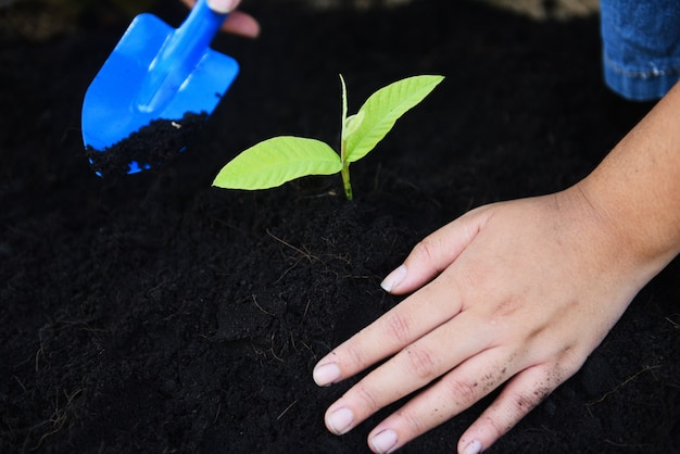 Gardening planting a tree seedlings young plant are growing on soil with hand woman help the environment. Premium Photo