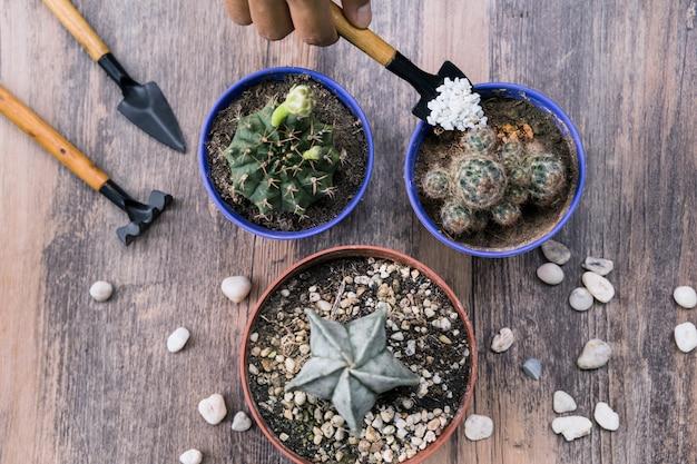 Giardinaggio Foto Gratuite