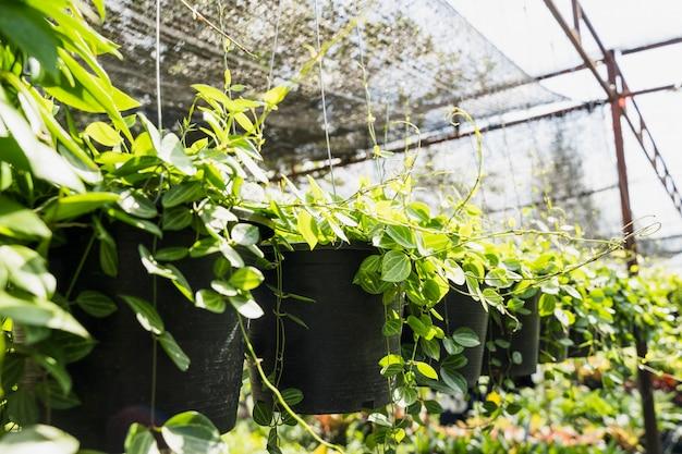 Gardening Free Photo