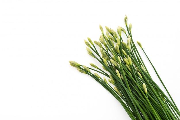 Garlic chives Free Photo