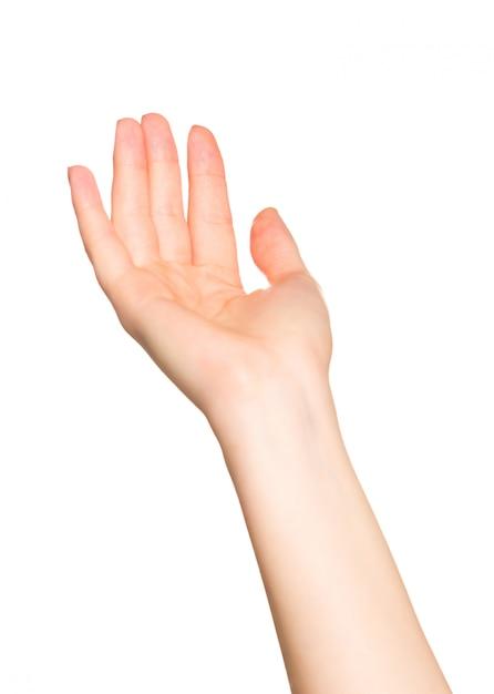 白で隔離されるgeasturesをしている女性の手 Premium写真
